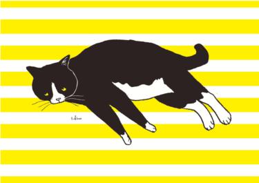 バイカラー猫
