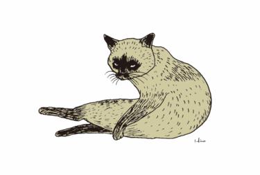 座りシャム猫