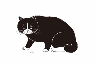 睨む黒白猫