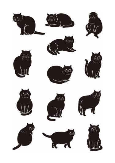 black cat2